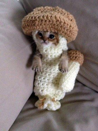 Котёнок в вязаном костюме грибочка
